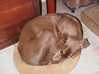 Mark in Quixote's bed_2127165387.jpg